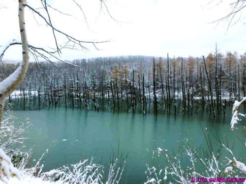 美瑛 青い池 冬