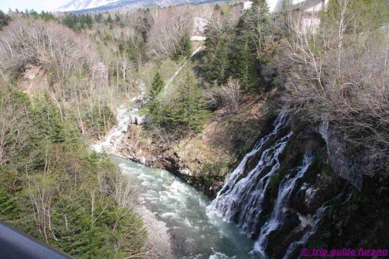 美瑛 富良野 白ひげの滝 5月 観光