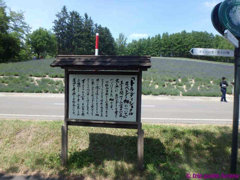 ファーム富田 6月 富良野 観光 ラベンダー 見ごろ